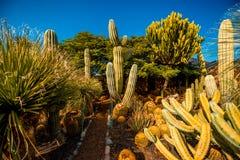 Jardim do cacto na ilha de Gran Canaria foto de stock