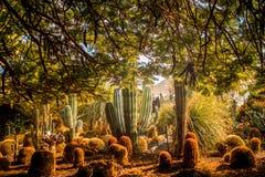 Jardim do cacto na ilha de Gran Canaria fotos de stock royalty free