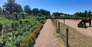 Jardim do campo no verão foto de stock royalty free