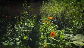 Jardim do campo no verão imagem de stock