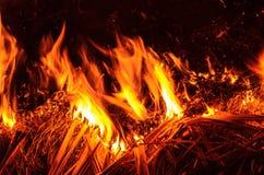 Jardim do fogo. Fotografia de Stock Royalty Free