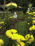 Jardim do Gerbera Foto de Stock Royalty Free