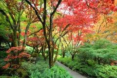 Jardim do japonês do outono Imagem de Stock Royalty Free