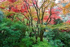 Jardim do japonês do outono Foto de Stock