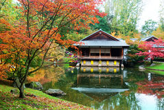 Jardim do japonês do outono Imagem de Stock
