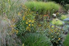 Jardim do outono completamente de gramas e de perennials decorativos fotos de stock