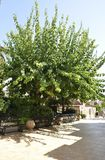 Jardim do pátio de Panagyia Kaliviani do monastério dos atoleiros na ilha da Creta de Grécia foto de stock