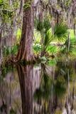 Jardim do pântano da plantação da magnólia foto de stock