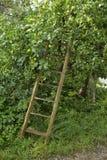 Jardim do país com escada velha fotos de stock