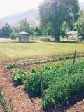 Jardim do quintal foto de stock