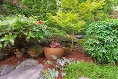 Jardim do quintal que ajardina com potenciômetro do ouro Imagem de Stock