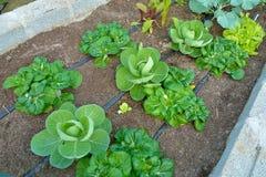 Jardim do sistema de irrigação do gotejamento Imagens de Stock