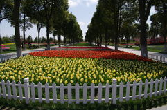 Jardim do Tulip imagem de stock