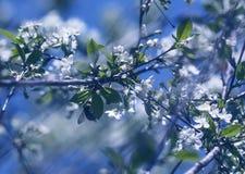 Jardim do vento na primavera Imagens de Stock Royalty Free