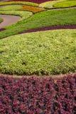 Jardim do verão Foto de Stock Royalty Free