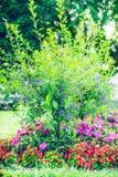 Jardim do verão que ajardina com a cama de flor bonita, exterior Imagem de Stock Royalty Free