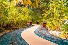 Jardim do zen e palmeiras e caminho japoneses das pedras Foto de Stock