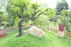 Jardim dos bonsais fotografia de stock royalty free