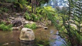Jardim dos peixes (teste padrão sem emenda) Fotografia de Stock Royalty Free