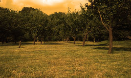 Jardim dos sonhos Imagem de Stock Royalty Free