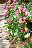 Jardim dos Tulips fotos de stock royalty free
