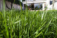 jardim e grama Fotografia de Stock Royalty Free
