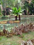 Jardim e lagoa tropicais Imagens de Stock