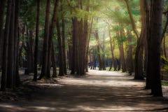 Jardim e luz Foto de Stock