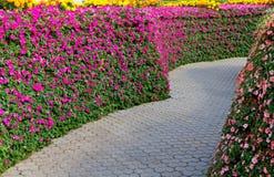 Jardim e trajeto Fotografia de Stock Royalty Free