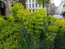 Jardim em Bruges fotos de stock