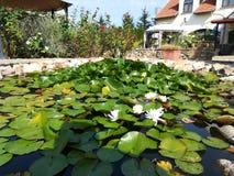 Jardim em Hungria fotografia de stock royalty free