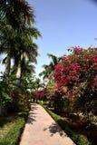 Jardim em India imagens de stock royalty free