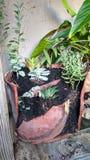Jardim em pasta com plantas carnudas imagens de stock royalty free
