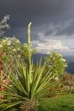 Jardim em uma altura de 2000 medidores. Colonia tovar, Venezuela. fotografia de stock royalty free