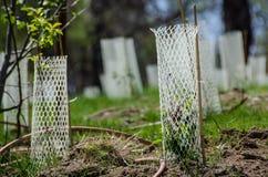 Jardim enchido com as plântulas protegidas por Mesh Protetor Tubes branco foto de stock royalty free