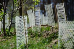 Jardim enchido com as plântulas protegidas por Mesh Protetor Tubes branco imagem de stock royalty free