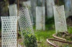 Jardim enchido com as plântulas protegidas por Mesh Protetor Tubes plástico branco imagem de stock royalty free