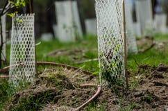 Jardim enchido com as plântulas protegidas por Mesh Protetor Tubes plástico branco imagens de stock