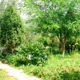 Jardim ensolarado imagem de stock royalty free