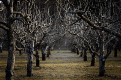 Jardim escuro Foto de Stock Royalty Free