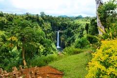 Jardim exótico colorido com vegetação e as plantas nativas de Oceania, Samoa, ilha de Upolu fotos de stock royalty free