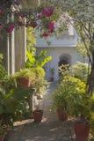 Jardim exótico Projeto da paisagem do jardim Foto de Stock