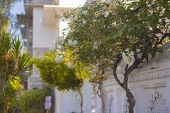 Jardim exótico Projeto da paisagem do jardim Fotos de Stock Royalty Free