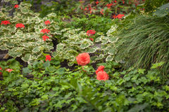 Jardim floral mágico Fotos de Stock