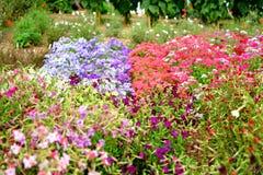 Jardim florescido colorido, flores foto de stock