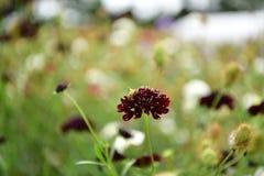 Jardim florescido colorido, plenitude das flores do verão fotos de stock