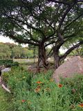 Jardim formal ajardinado Fotografia de Stock