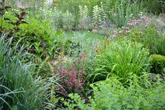 Jardim fresco do verão com o tolo das beiras de plantas agradáveis Imagem de Stock