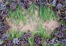 Jardim fresco fl da grama da planta da natureza do verde do campo da mola do close up da árvore da exploração agrícola do broto d Fotografia de Stock Royalty Free