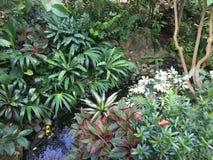Jardim Home Fotografia de Stock Royalty Free